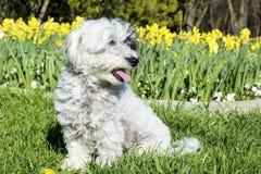 Witte hondzitting in een de lentetuin stock afbeelding