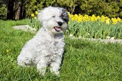 Witte hondzitting in een de lentetuin royalty-vrije stock afbeeldingen
