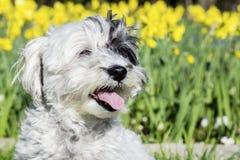 Witte hondzitting in een de lentetuin stock fotografie
