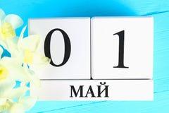 Witte houten kalender met de tekst op Rus: 1 mei Witte bloemen van gele narcissen op een blauwe houten lijst Dag van de Arbeid en royalty-vrije stock fotografie