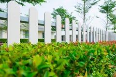 Witte houten piketomheining met groene installatiehaag Stock Afbeeldingen