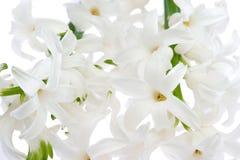 Witte hyacint Royalty-vrije Stock Afbeelding