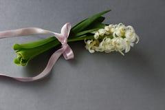 Witte hyacint met lint stock fotografie