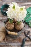 Witte hyacintbloemen en tuintoebehoren Royalty-vrije Stock Afbeelding