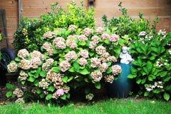 Witte installaties en bloemen, de herfstachtergrond Royalty-vrije Stock Foto