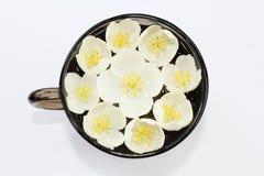Witte jasmijn Royalty-vrije Stock Foto's