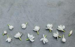 Witte jasmijnbloemen op donkere concrete achtergrond Gevoelig Royalty-vrije Stock Fotografie