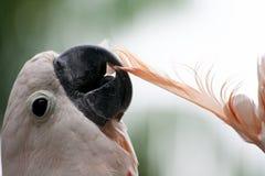 Witte Kaketoe stock foto's