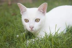 Witte kat royalty-vrije stock fotografie