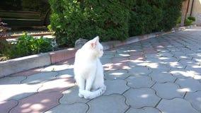 Witte kat stock foto