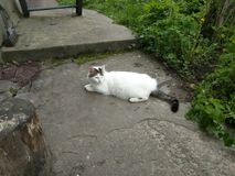 Witte kat! Stock Afbeeldingen