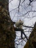 Witte kat in de lente openlucht Stock Foto's