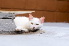 Witte kat die bij me staren die wat benieuwd zijn ik wil stock afbeeldingen