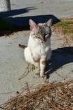 Witte kat die in een strandpromenade zonnebaden met pijnboomnaalden en zand stock afbeeldingen