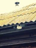Witte kat, die van eaves van een dorpshuis uitpuilen stock afbeelding