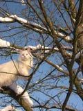 Witte kat en de winterboom stock fotografie