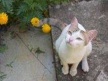 Witte kat en gele bloemen Stock Afbeelding