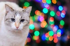 Witte kat en Kerstmislichten Stock Foto