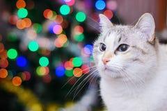 Witte kat en Kerstmislichten Royalty-vrije Stock Afbeeldingen