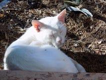 Witte kat int. dat hij met gras heeft bedekt stock foto