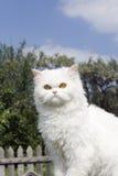 Witte kat in land Stock Afbeelding