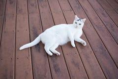 Witte kat laydown op het oude rode dek Royalty-vrije Stock Foto's