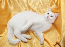 Witte kat met gele ogen Royalty-vrije Stock Afbeelding