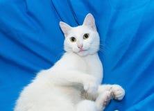 Witte kat met gele ogen Royalty-vrije Stock Foto's