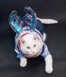 Witte kat met gele ogen in een gebreid kostuum en C Royalty-vrije Stock Afbeelding
