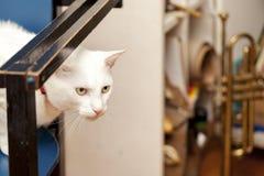 Witte kat met rode necklase royalty-vrije stock foto