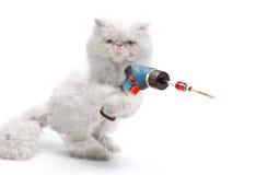 Witte kat met schroevedraaier Royalty-vrije Stock Fotografie