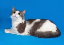 Witte kat met vlekken die op blauw liggen Royalty-vrije Stock Afbeeldingen
