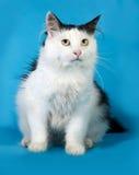 Witte kat met zwarte vlekken die op blauw zitten Royalty-vrije Stock Afbeeldingen