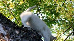 Witte kat op de boom stock videobeelden