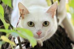 Witte kat op de boom stock afbeelding