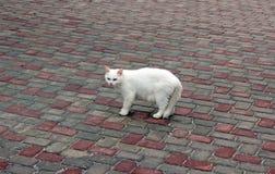 Witte kat op een bewolkte dag Royalty-vrije Stock Foto's