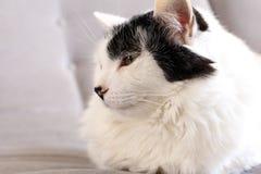 Witte kat op grijze achtergrond stock fotografie