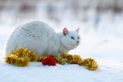 Witte kat op sneeuw Stock Foto
