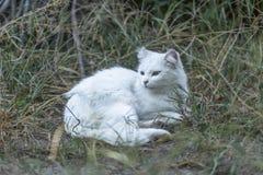 Witte kat op tuin in huis royalty-vrije stock fotografie