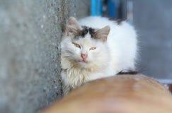 Witte kat op warme buis in de winter Stock Foto