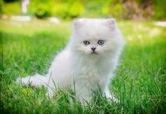 Witte katjeszitting in het gras Royalty-vrije Stock Foto's
