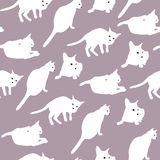 Witte Katten Royalty-vrije Stock Fotografie