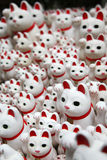 Witte Katten Stock Fotografie