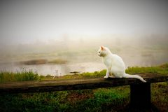 Witte katten nevelige ochtend stock afbeelding