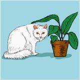 Witte kattenzitting dichtbij een installatie in een pot Royalty-vrije Stock Afbeeldingen