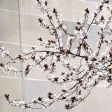 Witte kersenbloesems met exemplaarruimte Stock Afbeeldingen