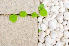 Witte kiezelsteen met groen blad Royalty-vrije Stock Afbeeldingen