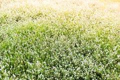 Witte kleine bloemen Royalty-vrije Stock Foto