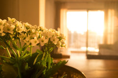 Witte kleine bloemen bij ruimte bij zonsondergang Stock Afbeeldingen
