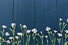 Witte kleine bloemen Vlak leg Hoogste mening royalty-vrije stock afbeeldingen